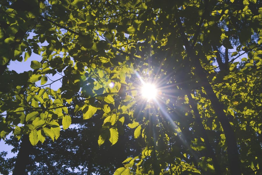 orchard leaves and sun